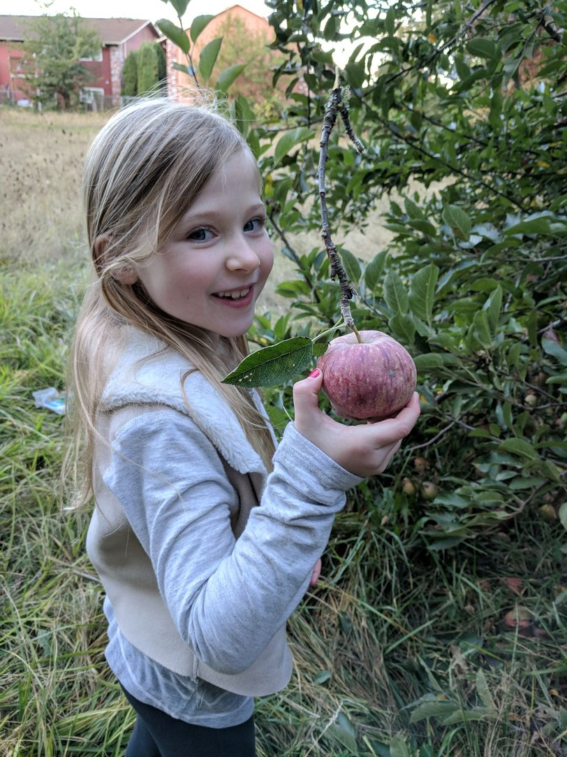 Cadence found an apple tree with an apple on it!
